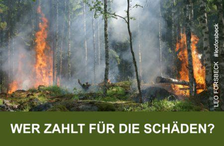 Ein Feuer im Wald kann große Schäden anrichten