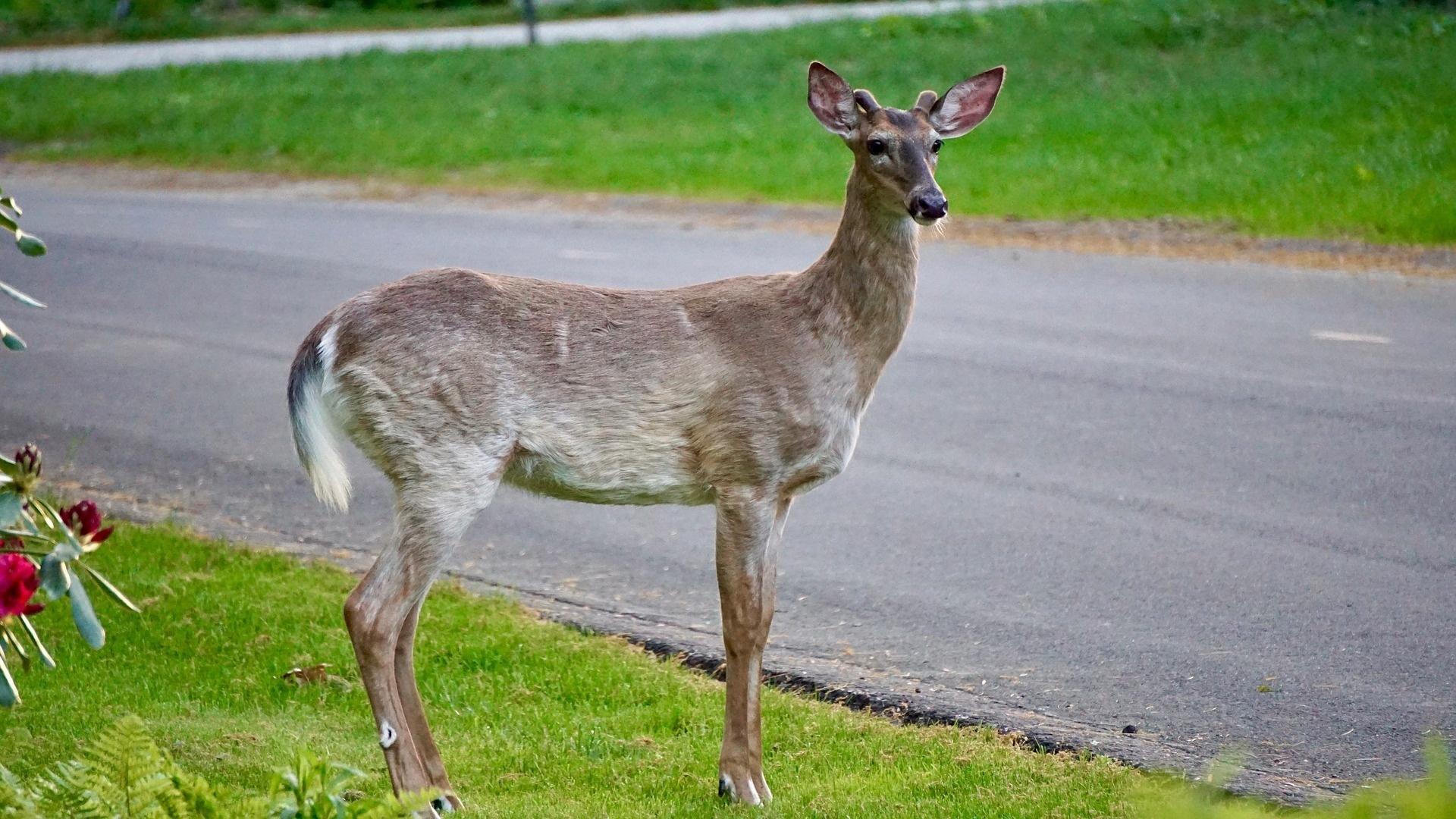 Wildschadenklausel Kaskoversicherung