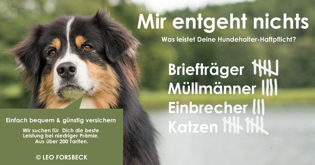 Hundehalterhaftpflicht-Versicherung