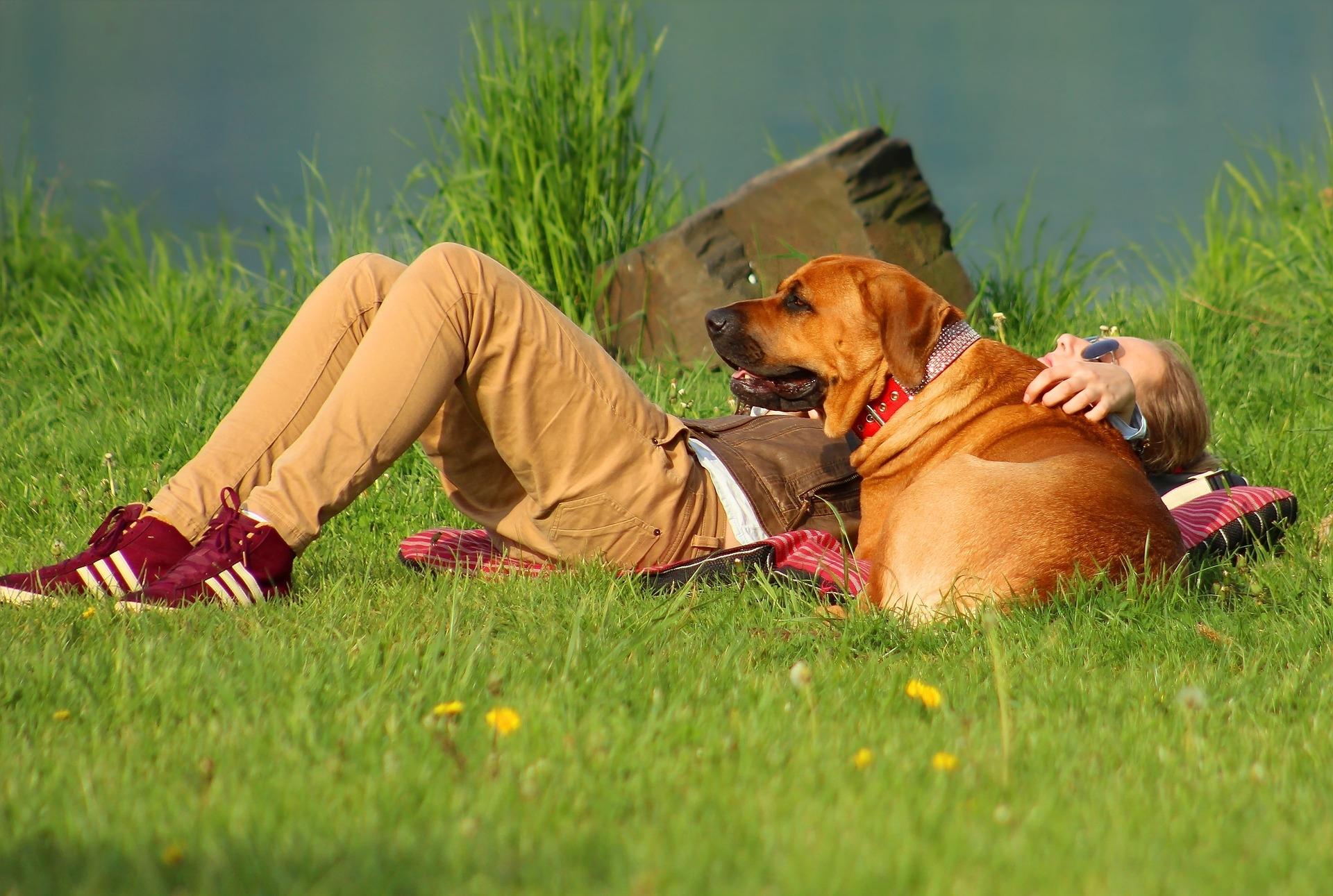 Versicherungspflicht für Hundehalter?