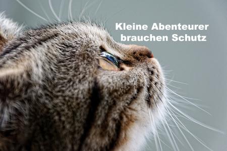 Katzen lieben Abenteuer | Leo Forsbeck - Die Versicherungs-Experten