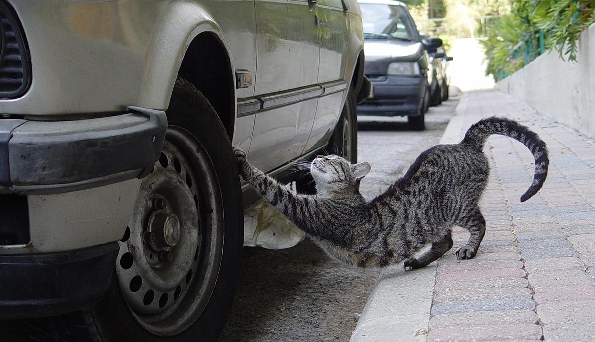 Katzen liegen gern auf warmen Motorhauben und verursachen Kratzer