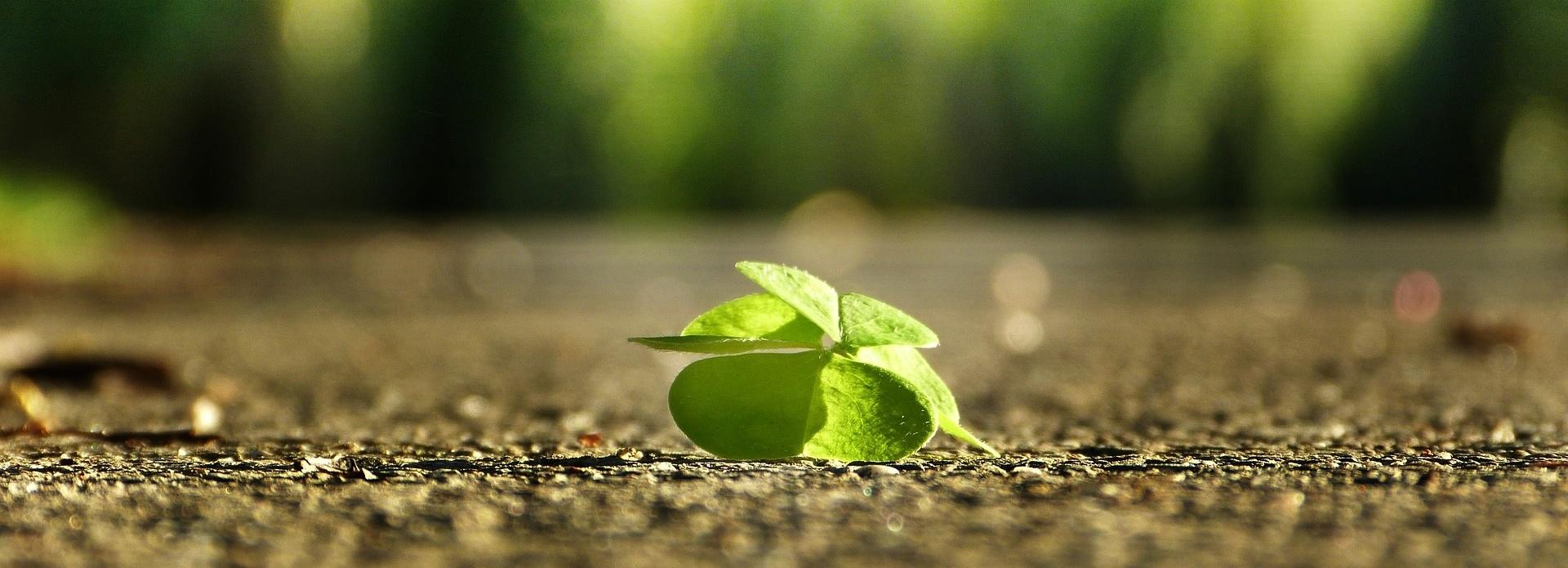 Wir bieten Ihnen nachhaltige - grüne - Versicherungslösungen
