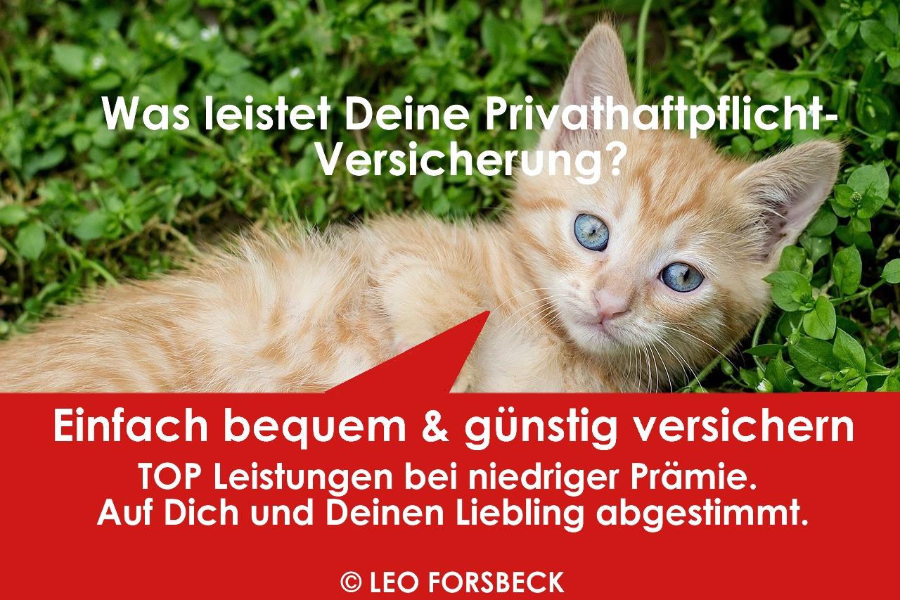 Leo Forsbeck - Die Versicherungs-Experten