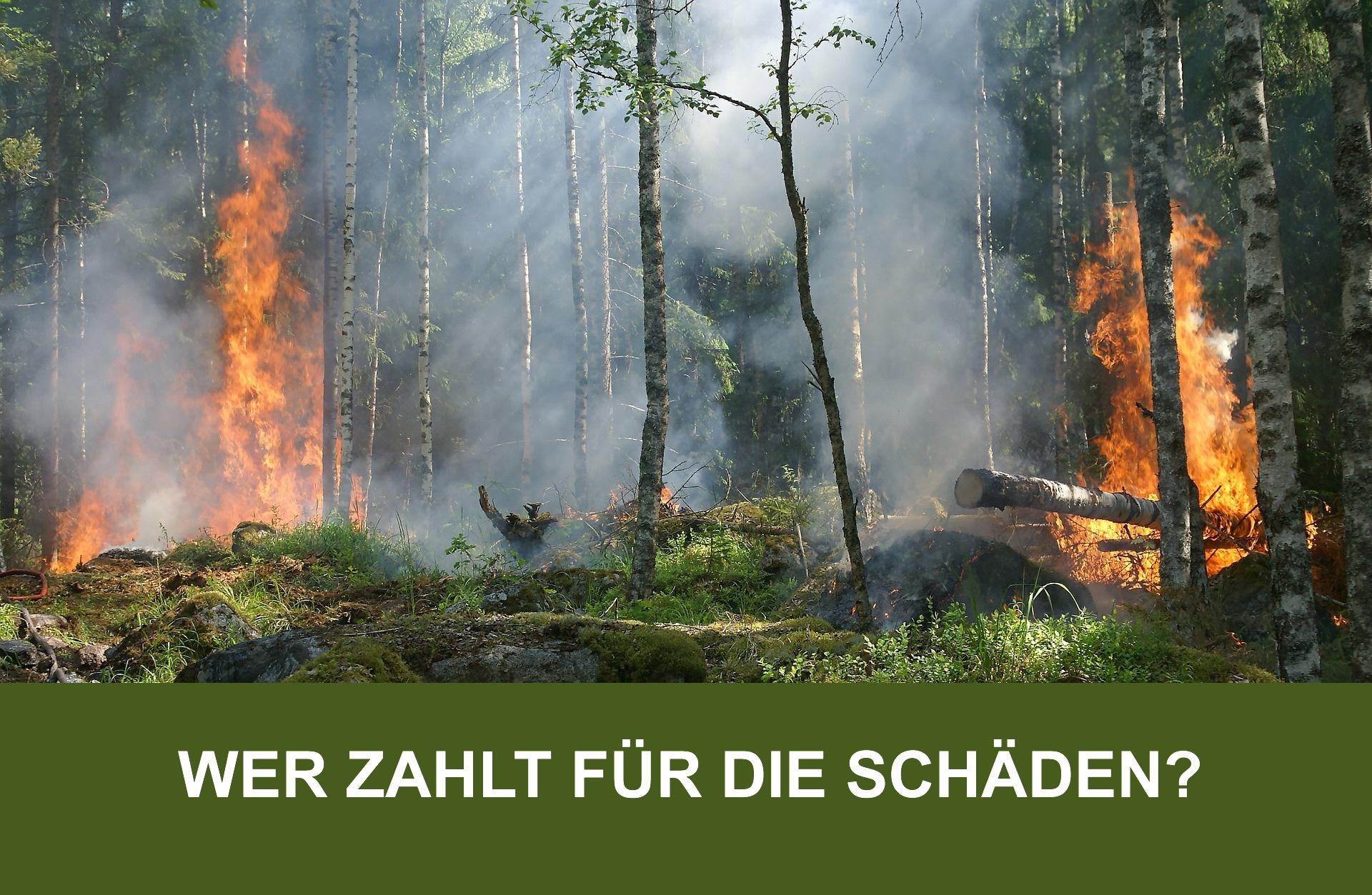 Wer zahlt für Schäden bei Waldbrand?