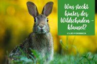 Kaskoversicherung Wildschadenklausel