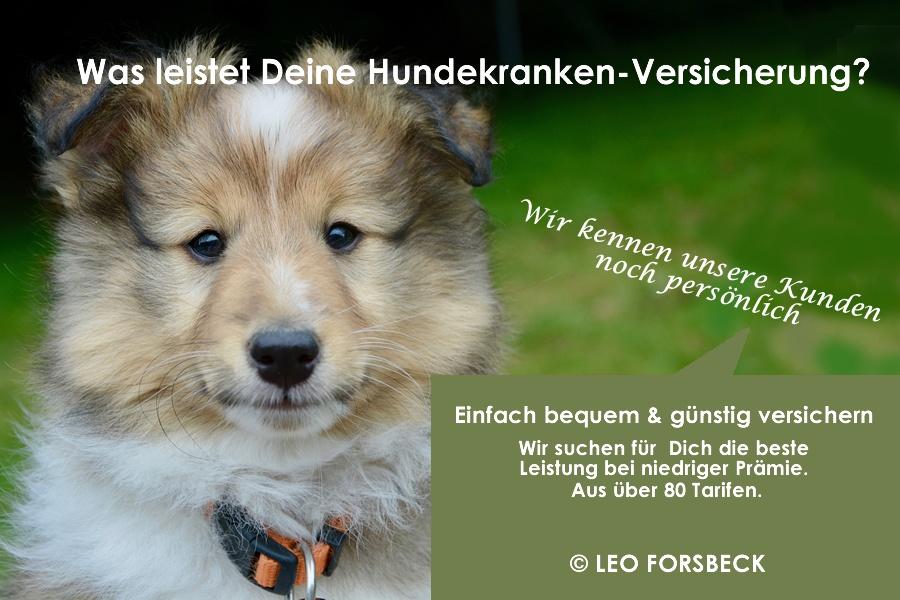 Hunde-Krankenversicherung