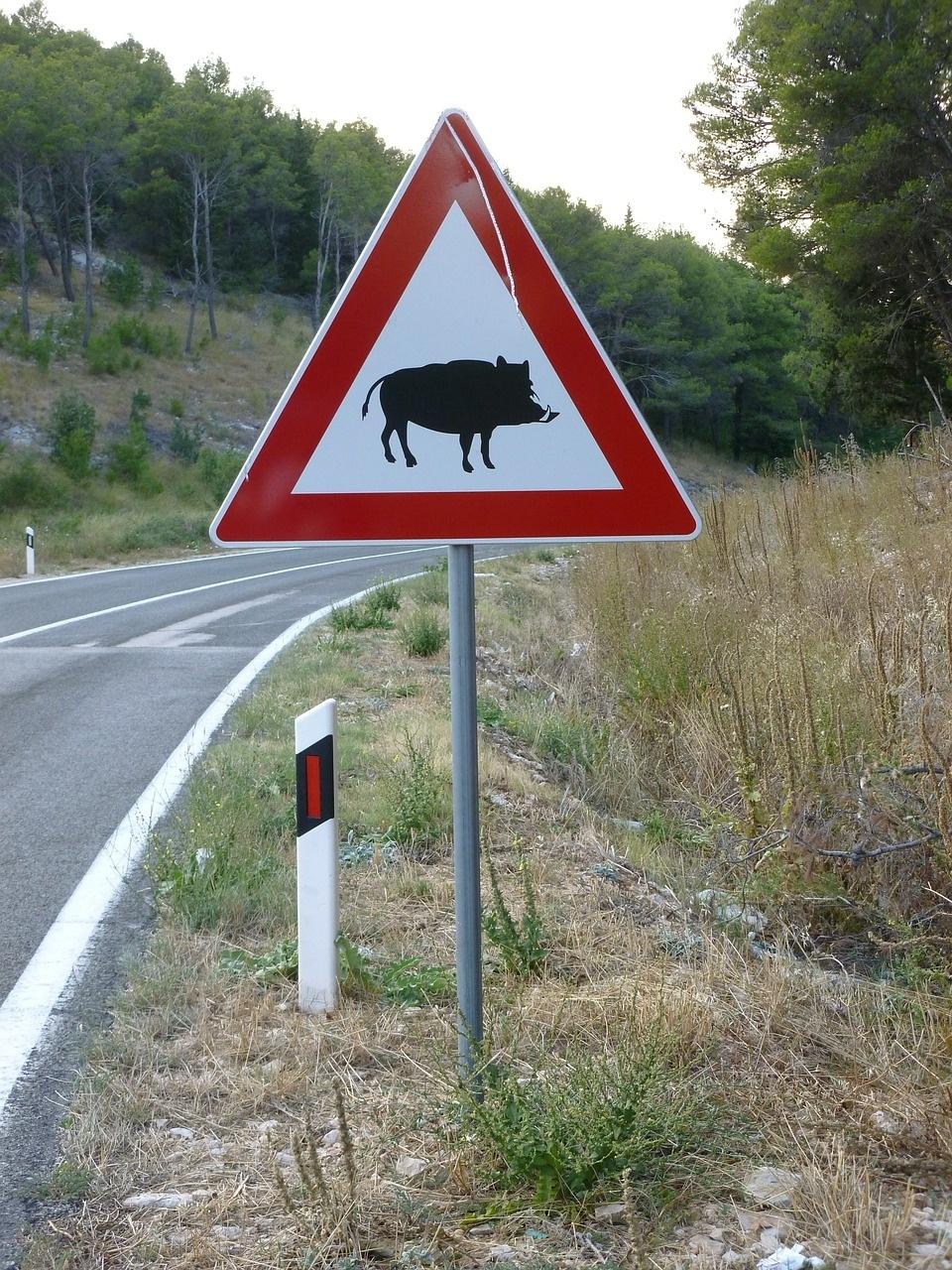 Strassenschild warnt vor Wildschwein Querungen